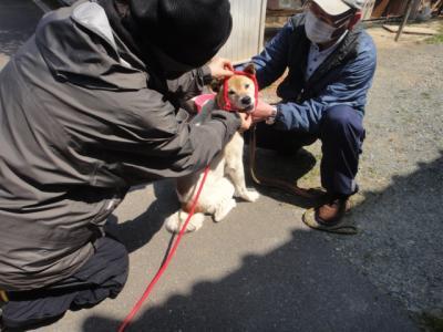救済犬2.jpg