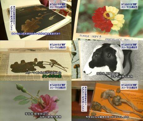 スリーマイル奇形動植物.jpg
